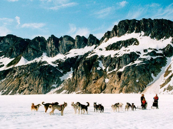 Dogsledding Team in Skagway, Alaska