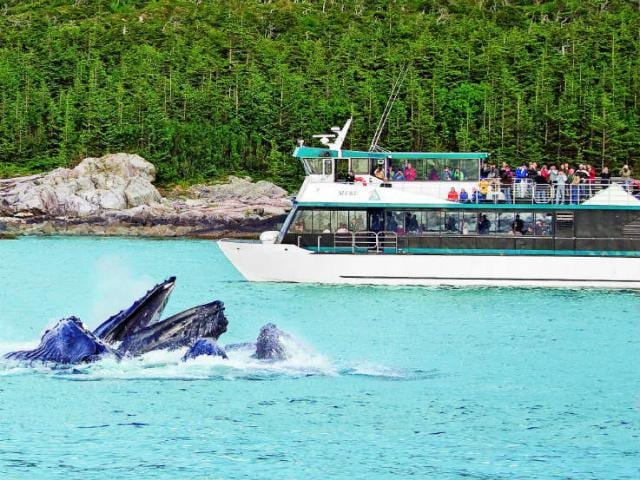 Cruise passengers watch whales breach the surface of the waters of the Inside Passage near Juneau, Alaska.