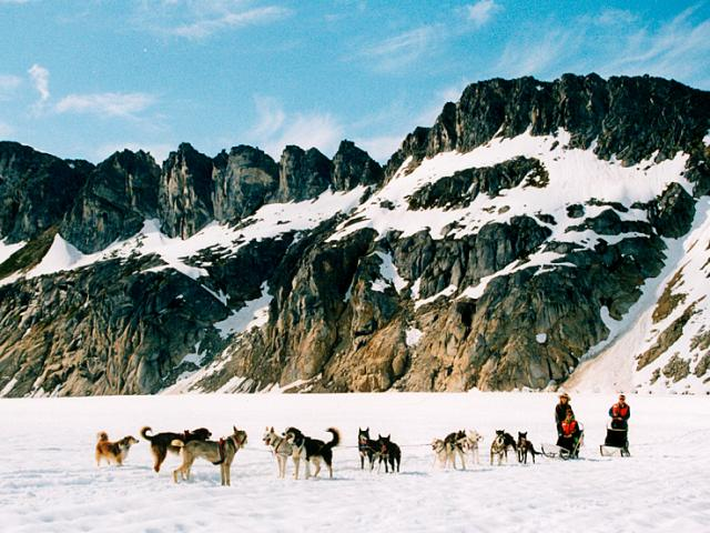 A dog sledding team glides through Skagway, Alaska.