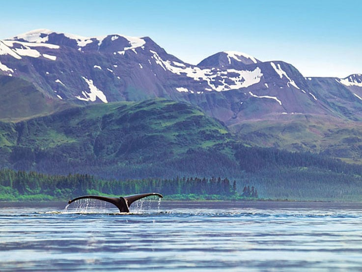 Whales swimming against a beautiful Alaskan backdrop