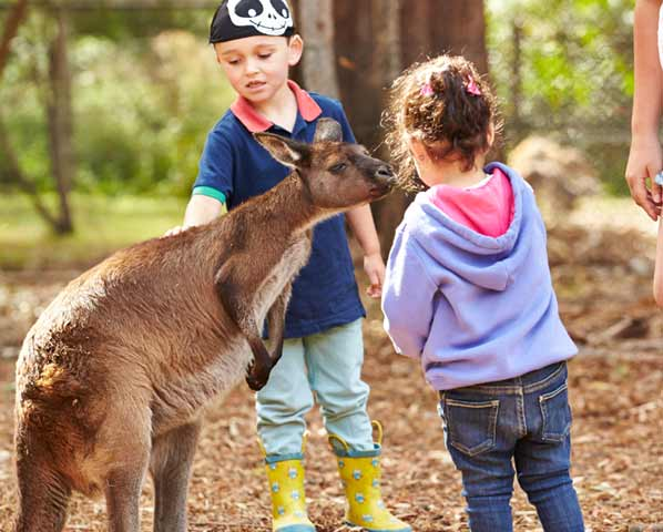 Kids interact with wildlife, including kangaroos on a New Zealand and Australia cruise