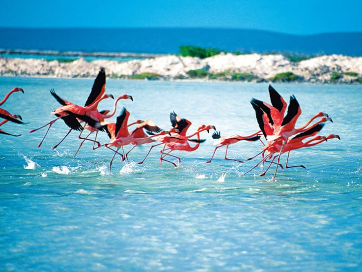 Escape To Bonaire St Thomas And Aruba On A Caribbean