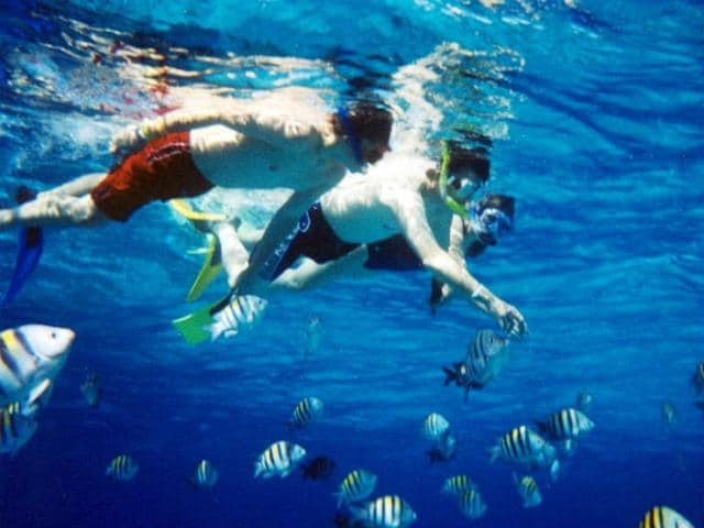 Snorkelers watching colorful fish in Cozumel, Mexico.