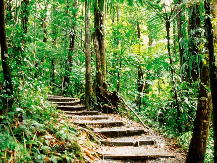 Winding path to The Emerald Pool, Dominica