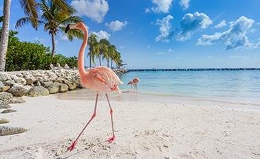 南方加勒比海