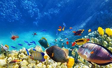 南方加勒比海集錦