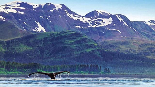 Image result for alaska cruise Juneau