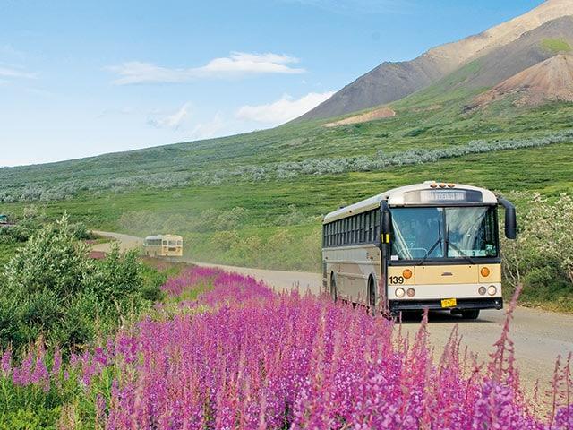 Denali Park Tours For Adventure Lovers Princess Cruises