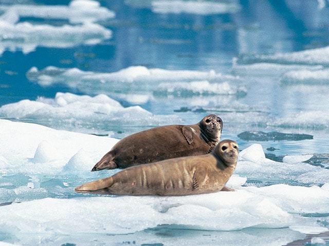 Alaska Wildlife Photo Gallery Wildlife Pictures Princess Cruises