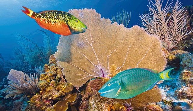 Western Caribbean Coral Reefs | Princess Cruises