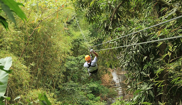 Zipline Through the Rainforest – Antigua | Princess Cruises