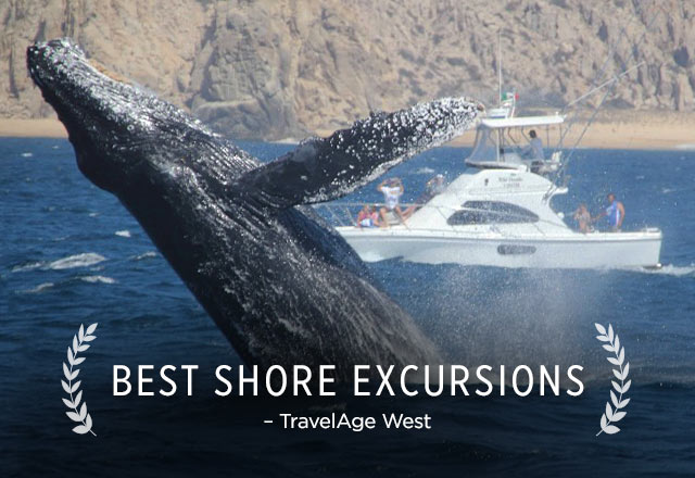 best shore excursions award form travel age west - Cabo San Lucas Whale Watching
