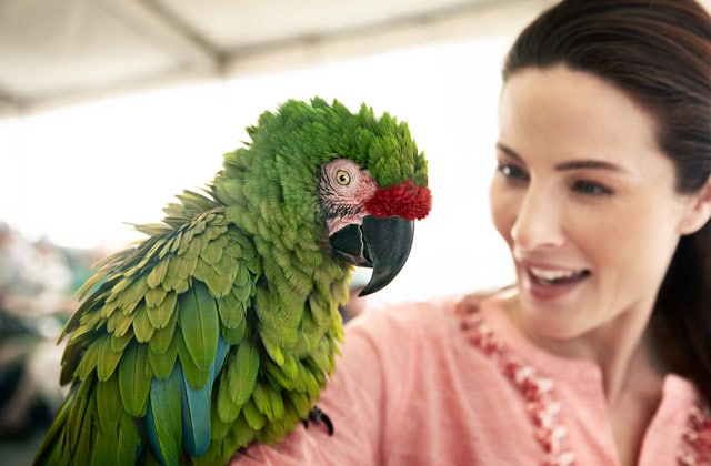 A woman holding a parrot with green, blue and red feathers