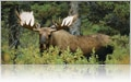 Alaska Wildlife Cruisetour - Princess Cruises