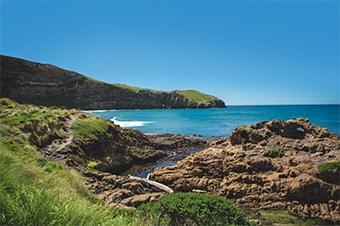 Otago Peninsula Yellow Eyed Penguin Reserve Enlarged image 1