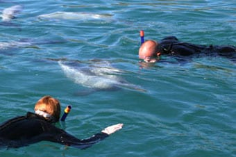 Akaroa Harbour Swim with Dolphins Enlarged image 1