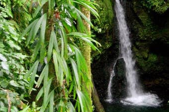 Rainforest, Waterfalls & Botanical Gardens Enlarged image 1
