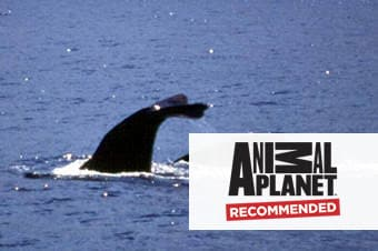 Whale & Dolphin Watching Scenic Cruise image