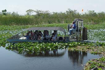 Princess Cruises Excursion Everglades Airboat Ride Eco