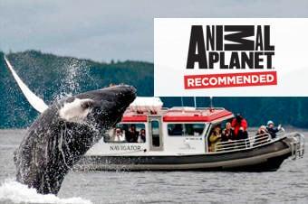 Princess Cruises Excursion Alaska S Whales Amp Mendenhall Glacier Trail