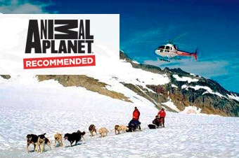 Local Connections: Dog Sledding & Glacier Adventure by Helicopter Created by Iditarod Musher image