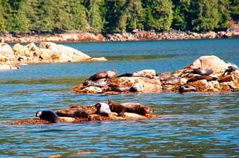 Coastal Wildlife Cruise Thumbnail image 2