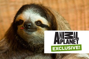 Animal Planet Exclusive -
