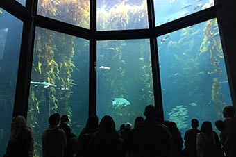 Princess Cruises : Excursion - Monterey Bay Aquarium