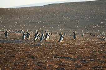 Punta Arenas Penguin Tour Price