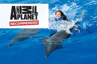 princess cruises excursion swim with dolphins