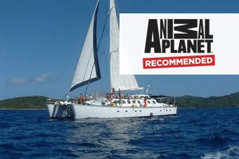Jolly Roger Roatan Catamaran Coastal Sail, Snorkel & Lunch image