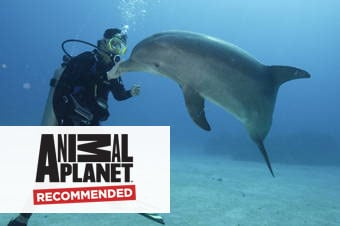 Certified Scuba Diving with Dolphins Enlarged image 1