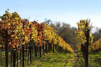 Sonoma Wine Country Enlarged image 1