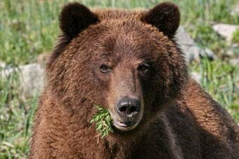 Alaska Nature & Wildlife Expedition Thumbnail image 3