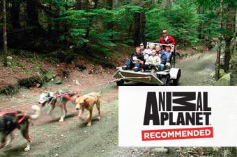 Princess Cruises Excursion Musher S Camp Amp Sled Dog Experience