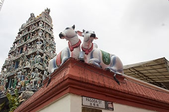 Chinatown, Little India & Raffles image